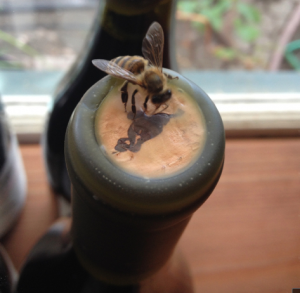 Bee on cork