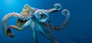 tentacles 4