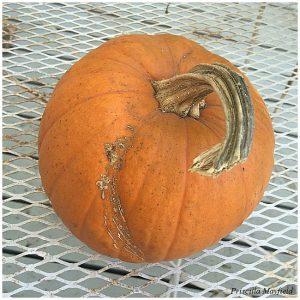 T&D Farms pumpkin